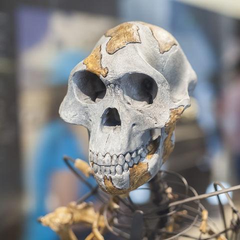 Das berühmteste Urskelett der Menschheit: Lucy, Nationalmuseum Addis Abeba, Äthiopien