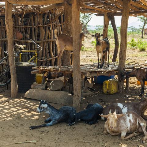 Traditionelle Tsemay-Häuser im Omo-Tal, Äthiopien