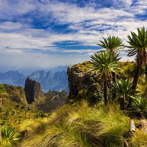 Wahnsinnsaussicht vom Imet Gogo Peak und riesige Lobelien im Simien Nationalpark, Äthiopien