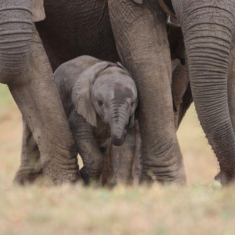 Baby Elefant in Herde, Südafrika