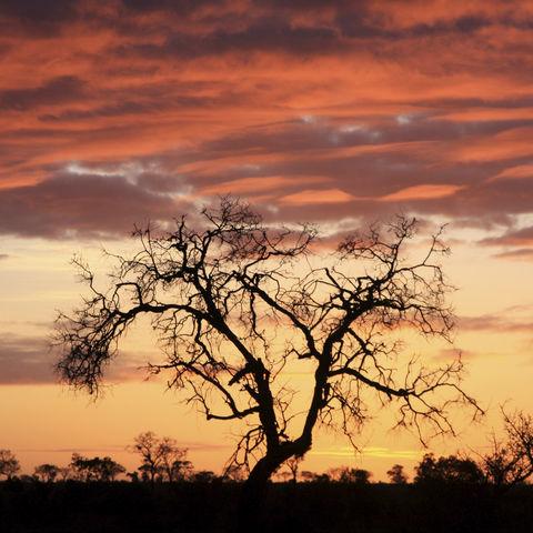 Afrikanische Sonnenuntergang, Südafrika
