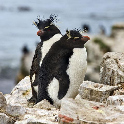 Antarktis mit Falkland-Inseln & Südgeorgien