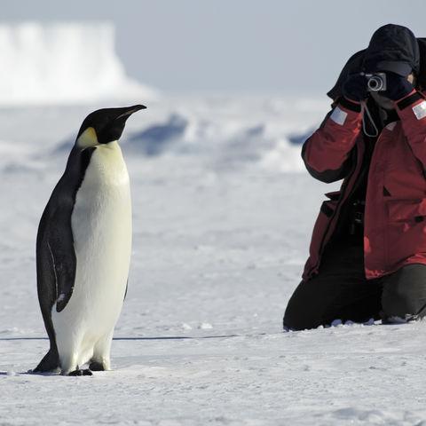 Fotograf im Eis, Antarktis