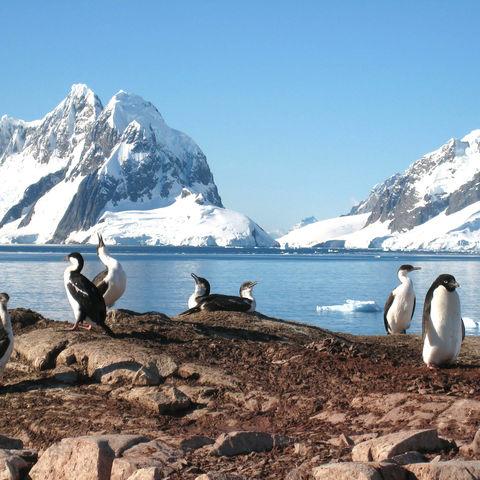 Adeliepinguin und andere Seevögel auf der Petermann Insel, Antarktis