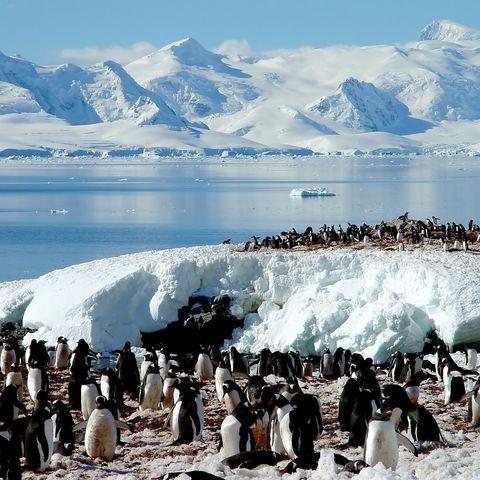 Pinguin-Gruppe, Antarktis