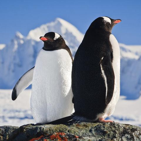 Sonnenbadende Pinguine, Antarktis