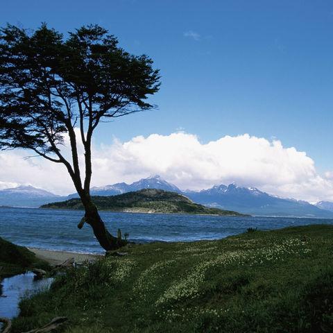 Baum an der Küste in der Bahia Lapataia, Argentinien