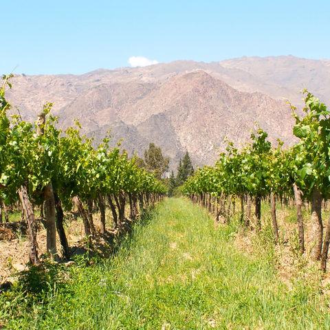 Weinanbau, Argentinien