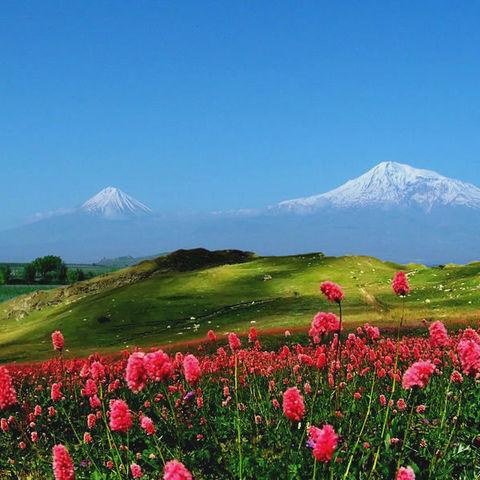 Blumenwiese vor dem Berg Ararat, Armenien