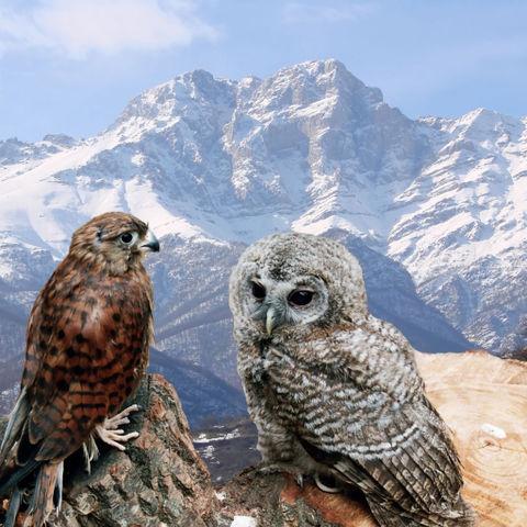 Vögel in der Berglandschaft des Kaukasus, Armenien