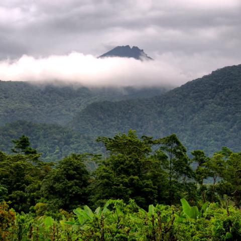 Auf Tour durch den Regenwald: Daintree Nationalpark in der Nähe von Cairns, Queensland, Australien