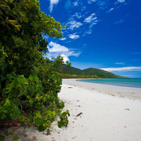 Regenwald trifft auf Ozean, Cape Tribulation, Australien