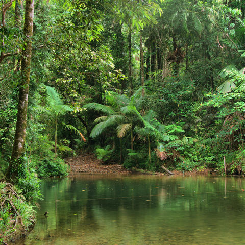 Regenwaldlandschaft im Daintree-Nationalpark in Queensland, Australien
