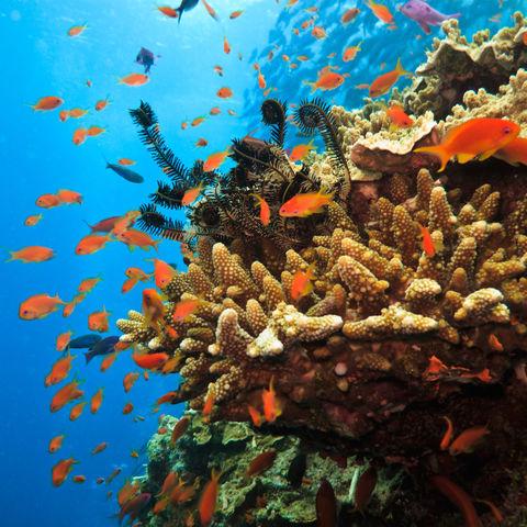 Farbenfrohes Great Barrier Reef, Australien