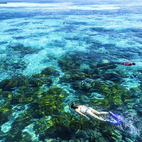 Eintauchen in eine Unterwasserwelt, die ihresgleichen sucht: Great Barrier Reef, Australien