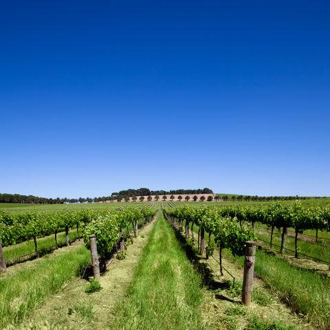 Weinbaugebiet Barossa Valley, Australien