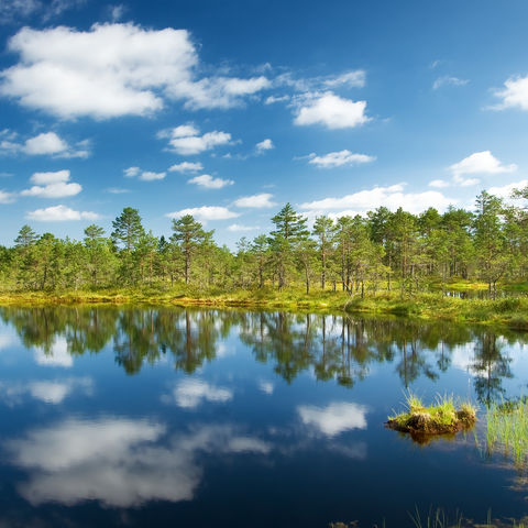 Die Viru Sümpfe im Lahemaa Nationalpark, Estland