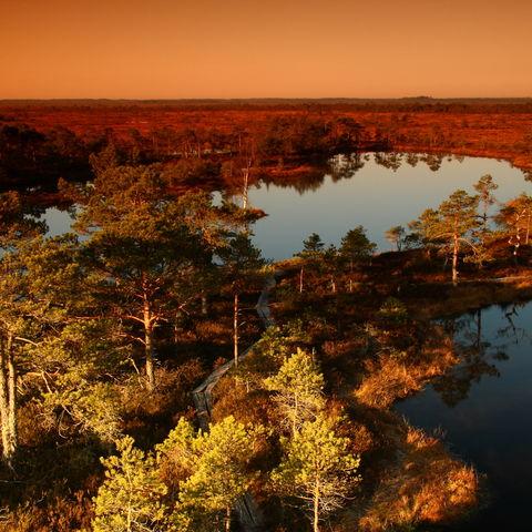 Sumpflandschaft in rote Herbstfarben gehüllt, Estland, Baltikum