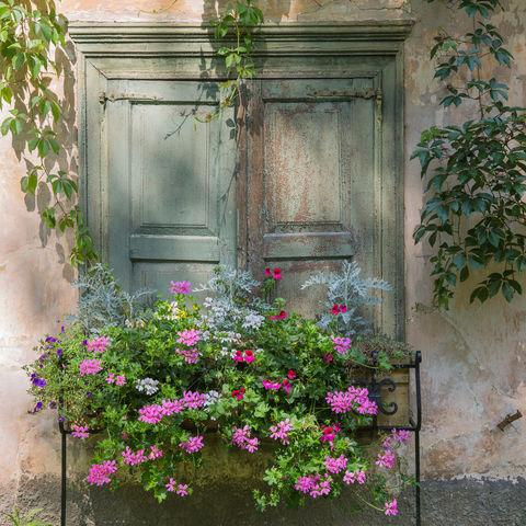 Blumenkasten an altem Gebäude, Riga, Lettland, Baltikum