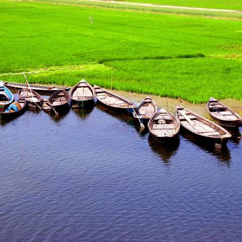 Boote am Ufer eines Reisfelds, Bangladesch