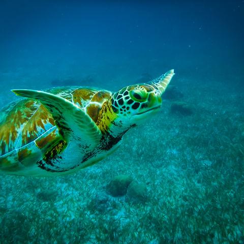 """Beim Schnorcheln im Belize Barrier Reef kommen Sie nicht """"nur"""