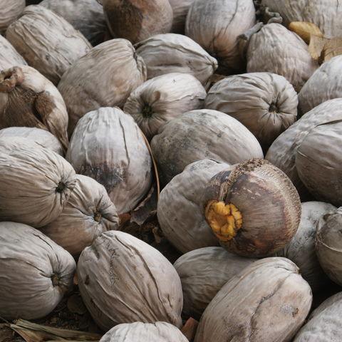 Wer hat die Kokosnuss geklaut?, Belize
