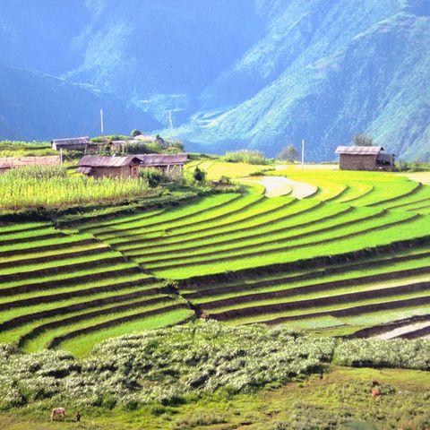Leuchtende Reisfelder, Bhutan