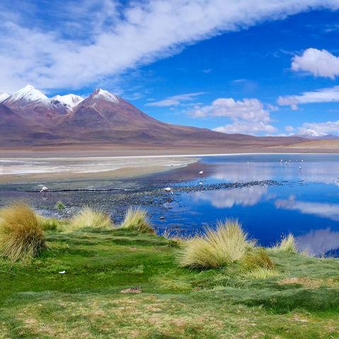 Unterwegs auf Boliviens Lagunenroute: Laguna Hedionda, Bolivien