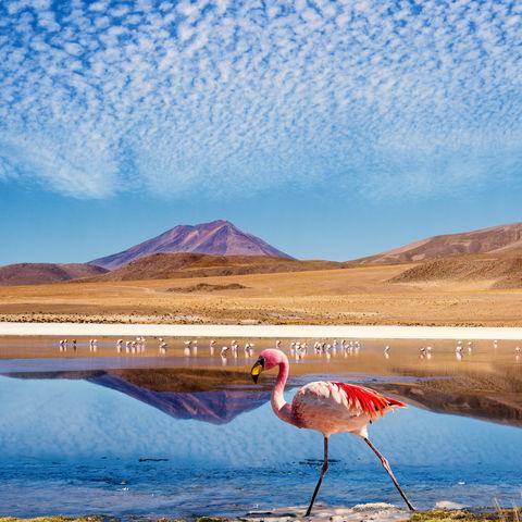 Flamingo vor einer Lagune © Filippo Romeo, Dreamstime.com