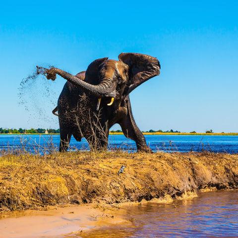 Duschender Elefant, Botswana