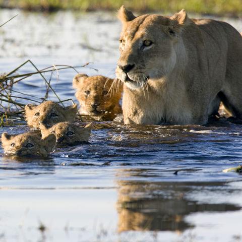 Schnell auf die andere Seite..., Botswana