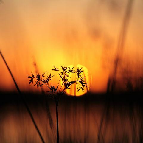 Afrikanischer Sonnenuntergang im Okavangodelta, Botswana
