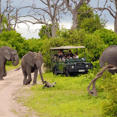 Den Dickhäutern ganz nah: auf Pirschfahrt durchs Tierparadies, Botswana
