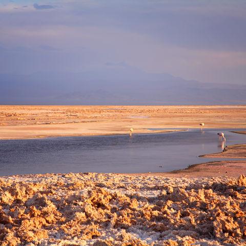 Salzsteine und Flamingos in der Atacama-Wüste, Chile