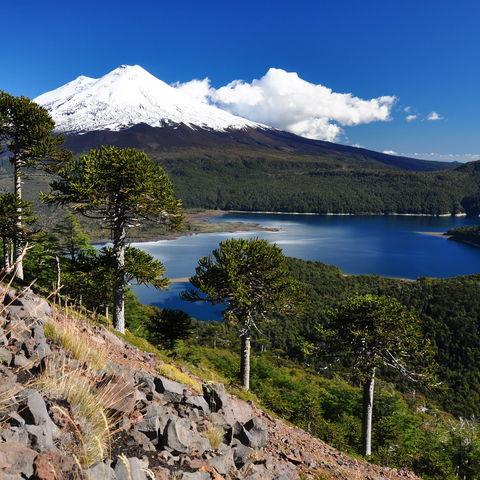 Llaima-Vulkan hinter dem Conguillío-See, Chile