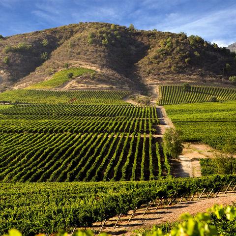 Grüne Weinbauregion, Chile