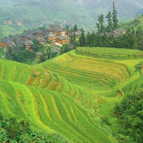 Bis knapp 1.000 m hoch: die Reisterrassen von Longsheng, Guangxi, China
