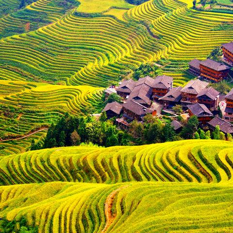 Blick auf die Reisterrassen in Longsheng, China