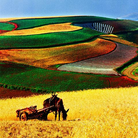 Der Herbst taucht die Felder von Kunming in rotbraune Farben, Yunnan, China