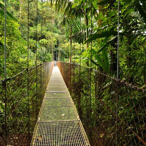 Hängebrücken durch den Regenwald, Costa Rica