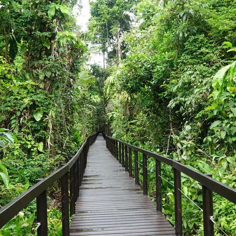 Dschungel im Cahuita Nationalpark, Costa Rica
