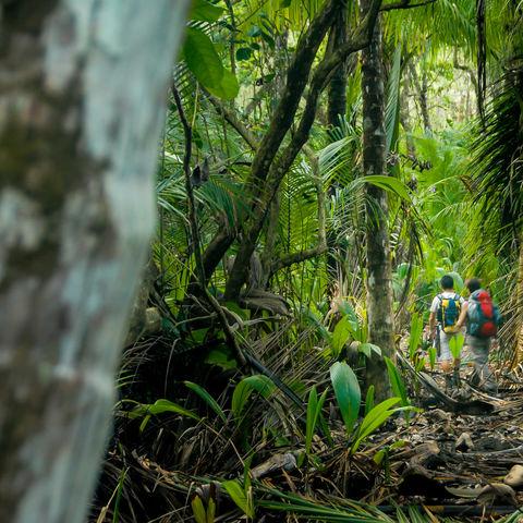 Über Stock und Stein im noch weitestgehend unbekannten Corcovado Nationalpark, Costa Rica