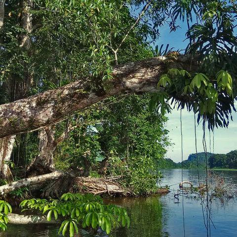 Idyllische Flussandschaft, Costa Rica