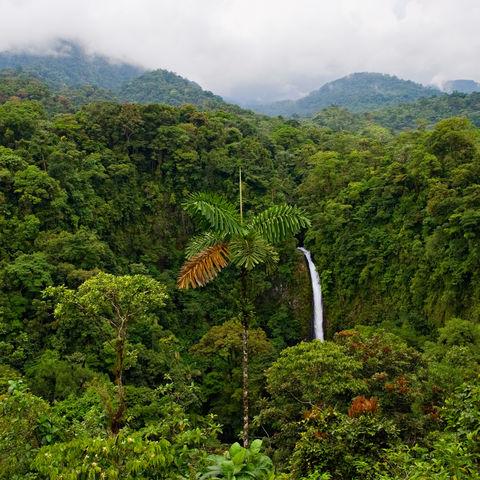 Aus dem Nichts im undurchdringlichen, grünen Dschungel: der La Fortuna Wasserfall, Costa Rica