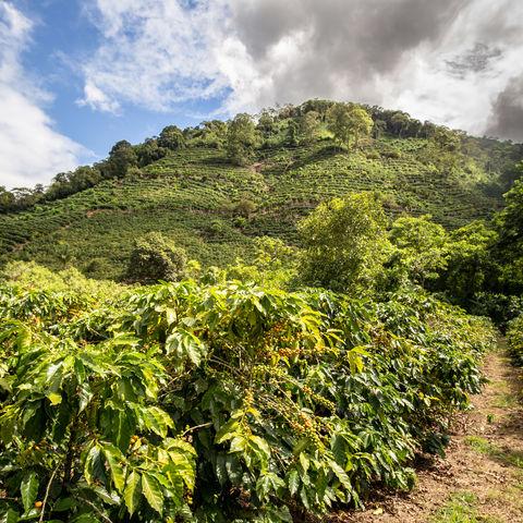 Reizvolles Orosi Tal mit wunderhübschen Kaffeeplantagen, Costa Rica