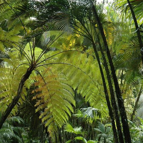 Dichter Regenwald, Costa Rica