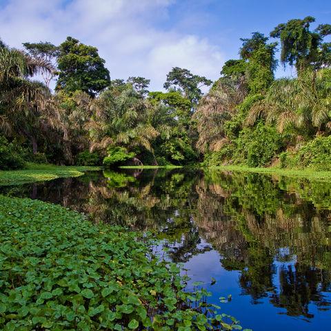 Üppige Natur im Regenwald, Costa Rica