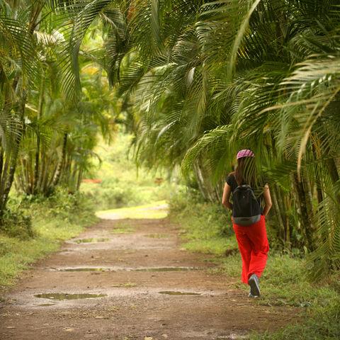 Spaziergang unter Palmen, Costa Rica