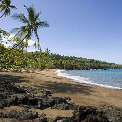 Palmen säumen den Strand, Costa Rica