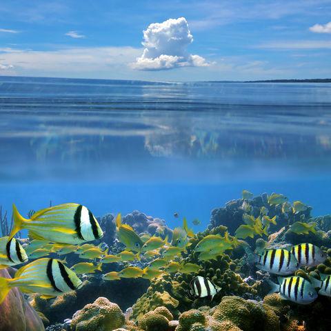 Bunte Unterwasserwelt und blauer Himmel, Costa Rica
